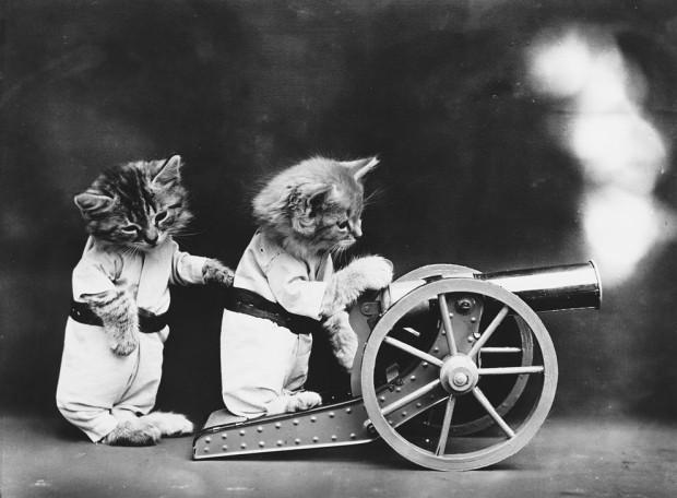 cat cannon